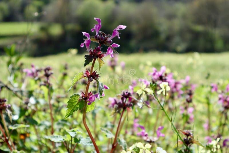Kwiaty w krajobrazie obrazy stock
