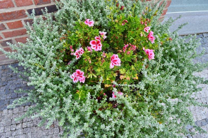 Kwiaty w krzaku na ulicie obrazy stock