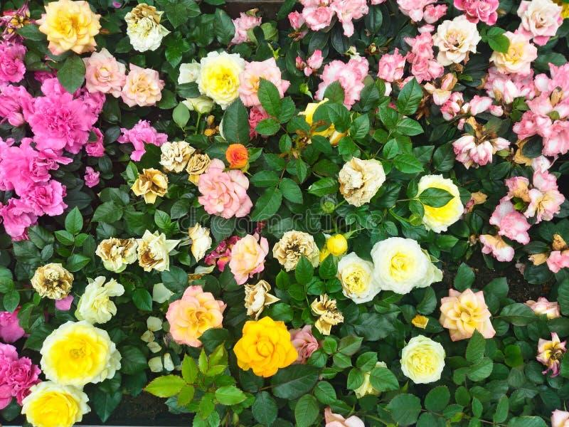 Kwiaty w kwiacie obraz royalty free