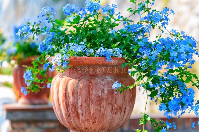 Kwiaty w kwiatu garnku przy Augustus ogródami na Capri wyspie fotografia royalty free