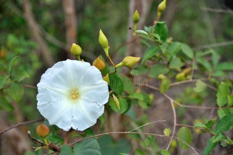 Kwiaty w naturze na zielonym tle obrazy royalty free