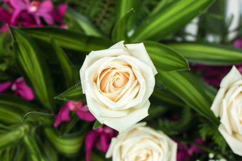 Kwiaty w ogródzie fotografia stock