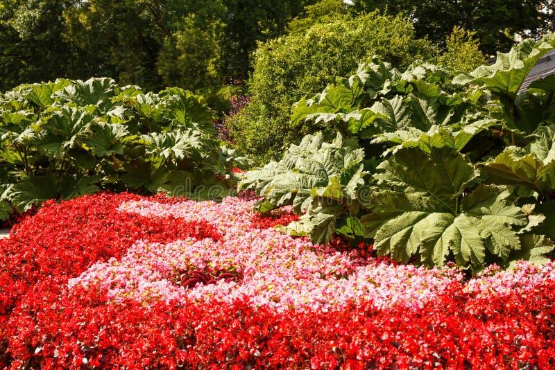 Kwiaty w parku zdjęcie royalty free