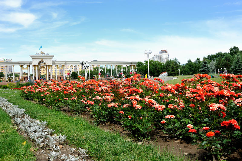 Kwiaty w parku obraz stock