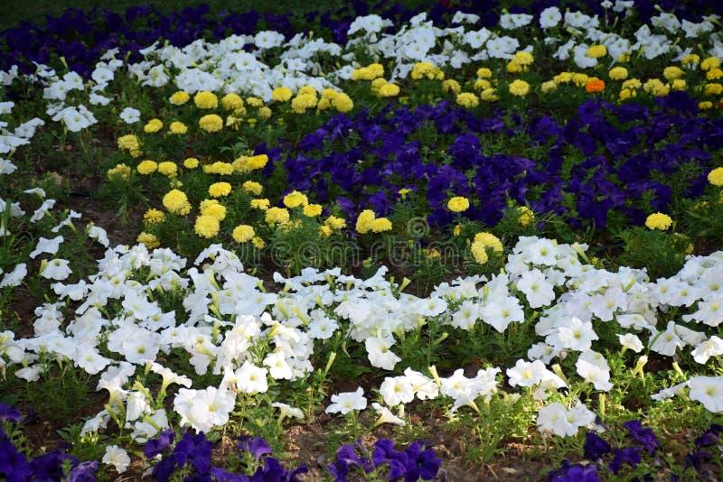 Kwiaty w parku fotografia stock