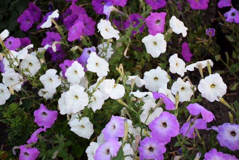 Kwiaty w parku zdjęcia stock