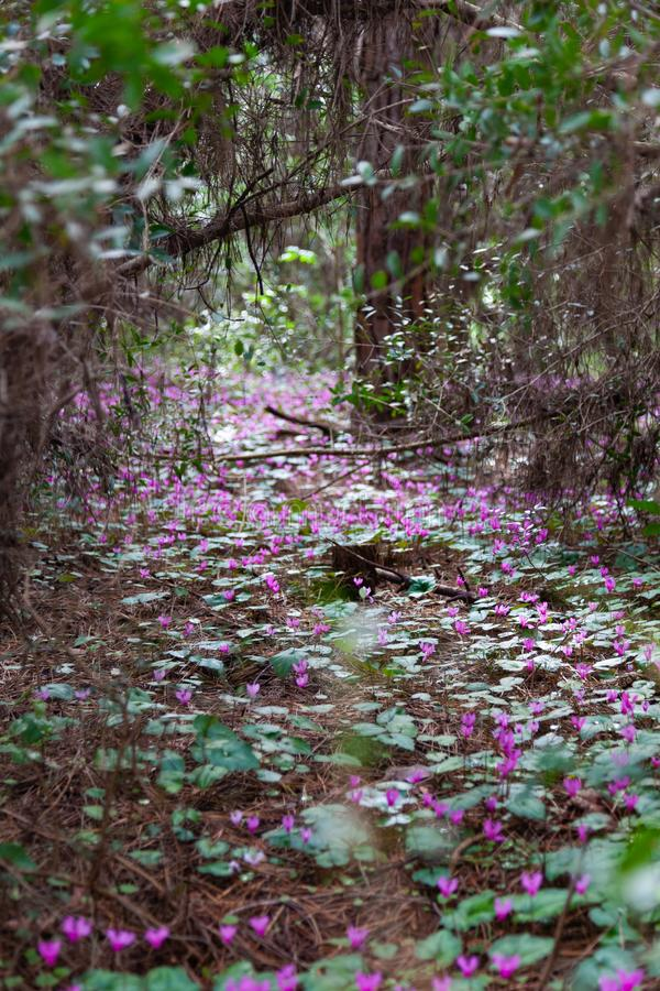 Kwiaty w Pineta di Cecina, kwiecień 2011 r. obrazy royalty free