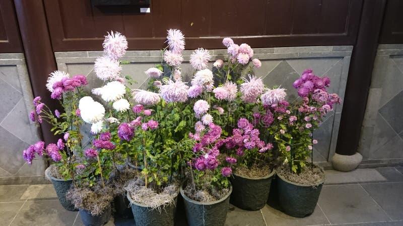 Kwiaty w Portland obrazy stock