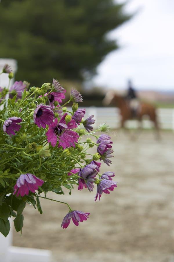 Kwiaty w przedstawienie pierścionku fotografia stock