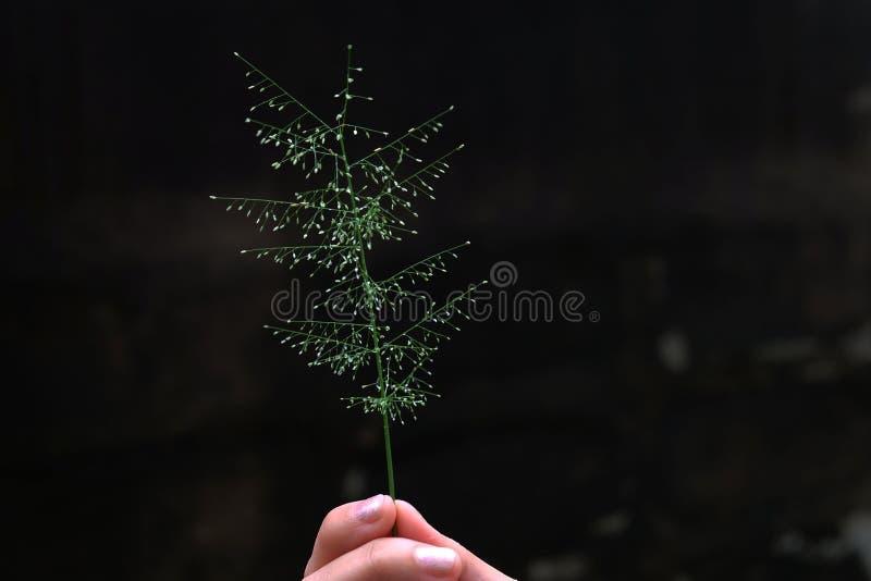 Kwiaty w ręce fotografia royalty free