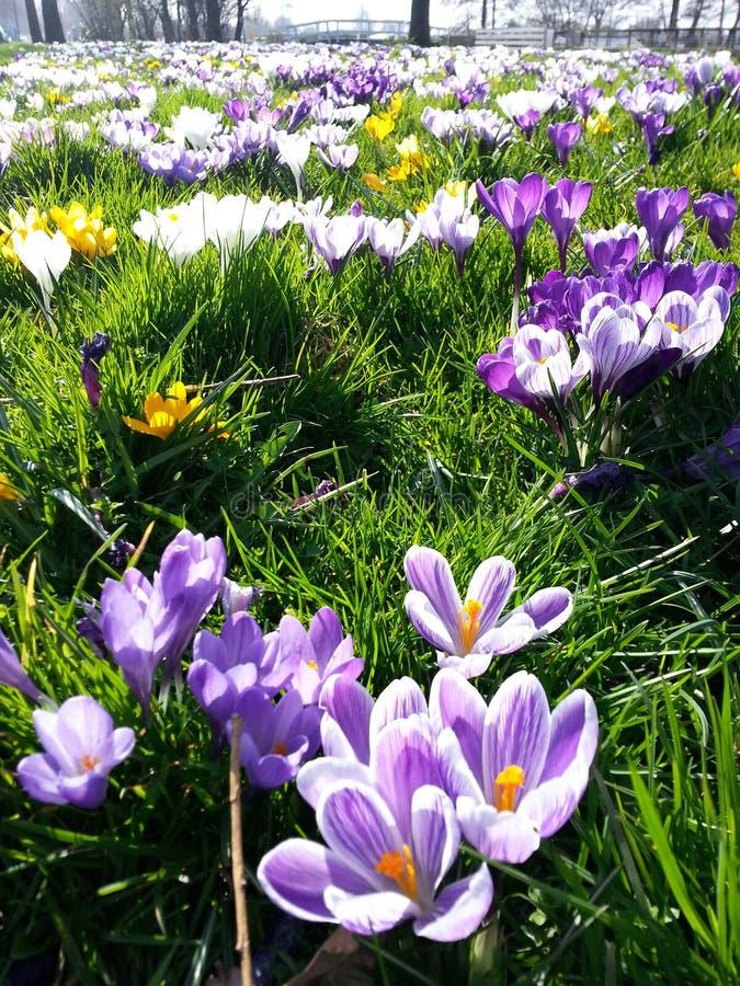 Download Kwiaty w słońcu obraz stock. Obraz złożonej z niedziela - 42525453