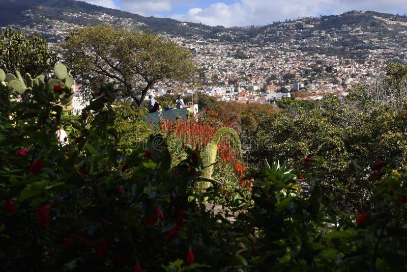 Kwiaty w Santa Caterina parku w mieście Funchal madera zdjęcia royalty free