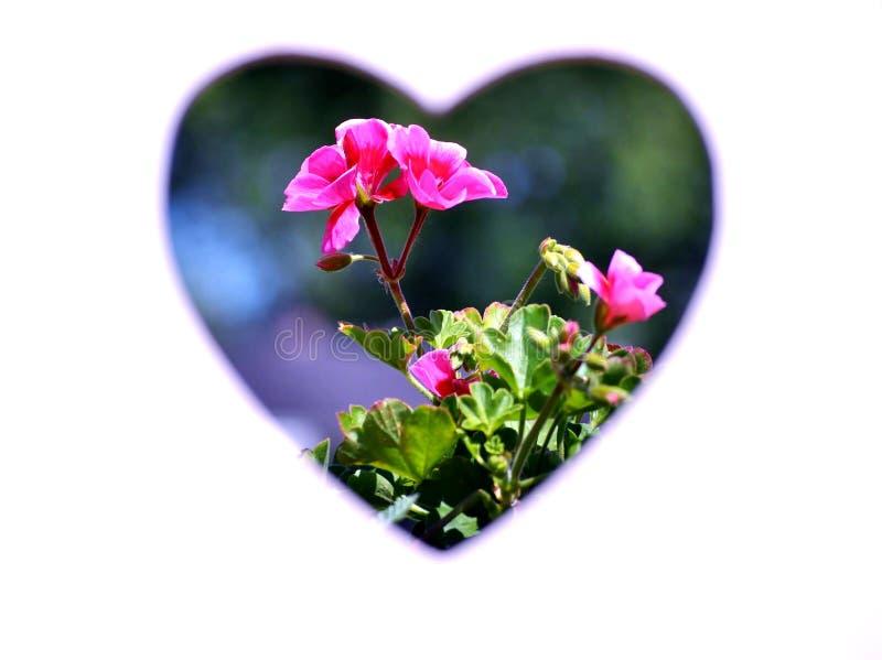 Kwiaty w sercu Biały tło obraz stock
