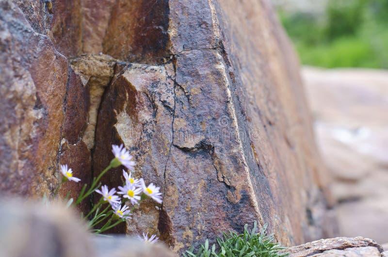 Kwiaty w skale obraz stock