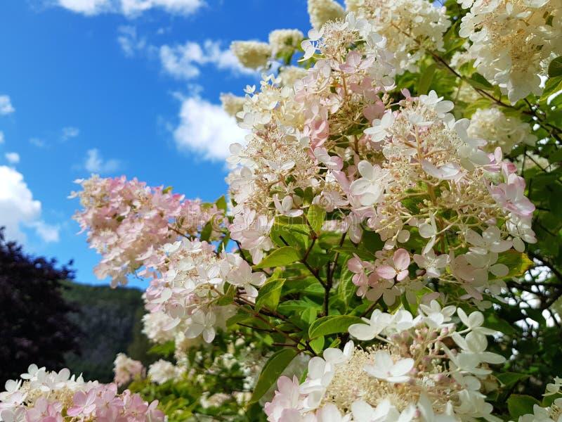 Kwiaty w spadku obraz stock