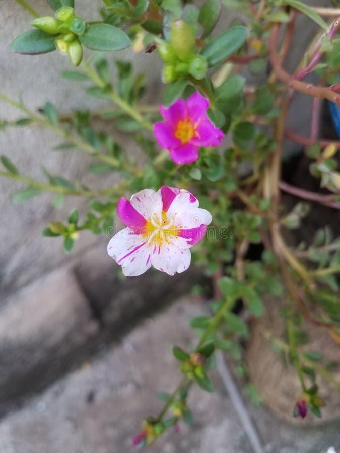 Kwiaty w sposobie obrazy royalty free