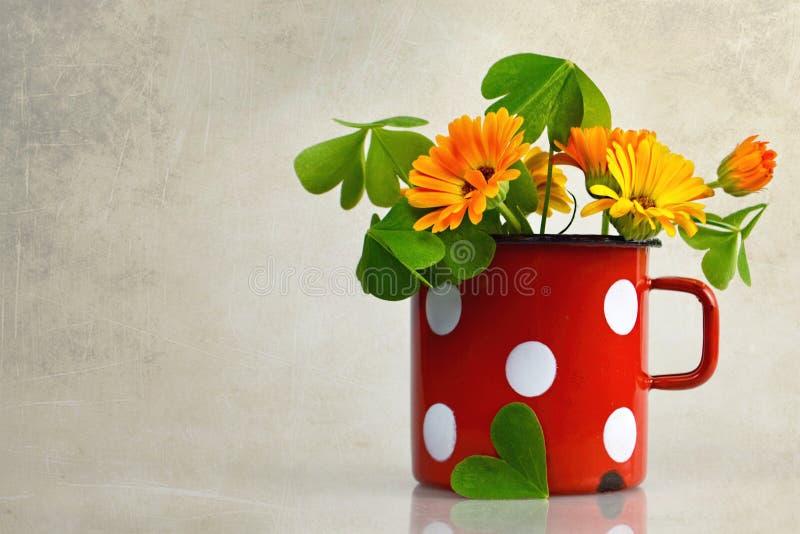 Kwiaty w starym kubku fotografia royalty free
