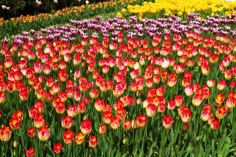 Kwiaty w wiosna parku Kwiatu krajobraz fotografia stock