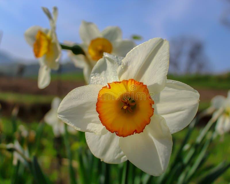 Kwiaty w wiosna obrazy stock