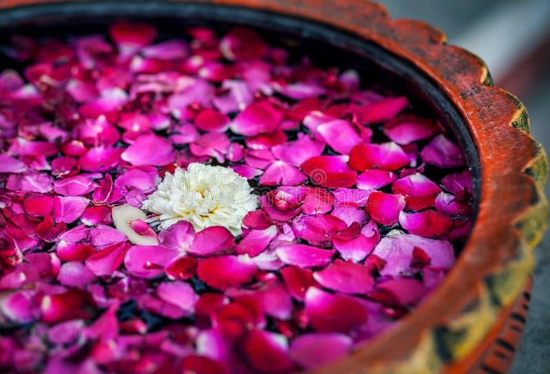 Kwiaty w zdroju zdjęcie royalty free