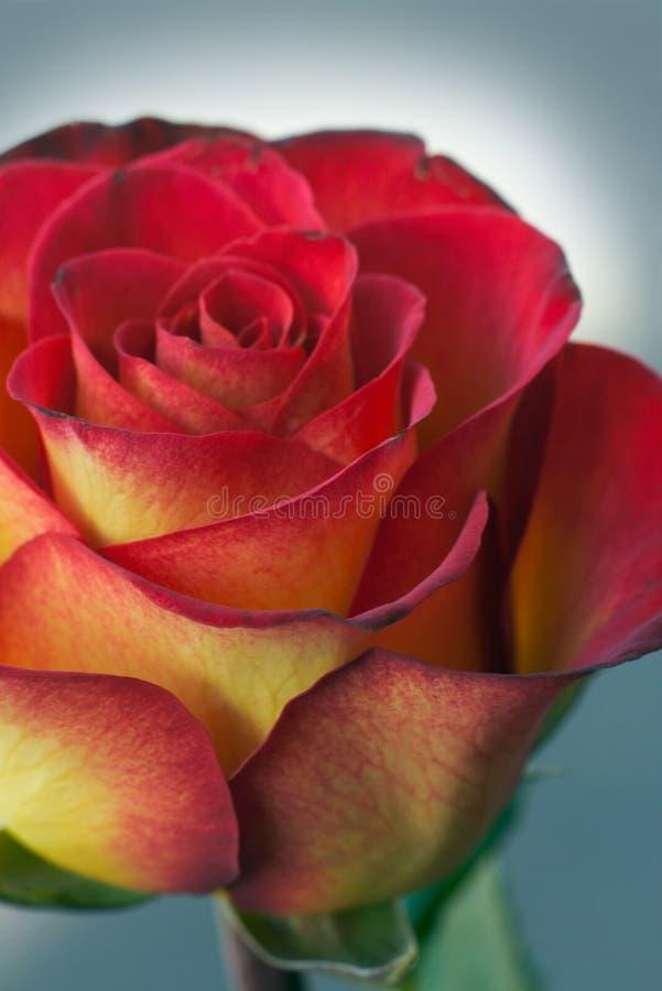 kwiaty wakacje fotografia royalty free