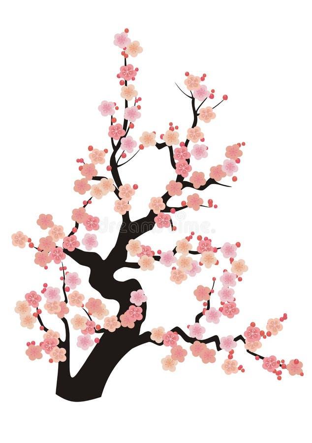 kwiaty wiśni ilustracja wektor