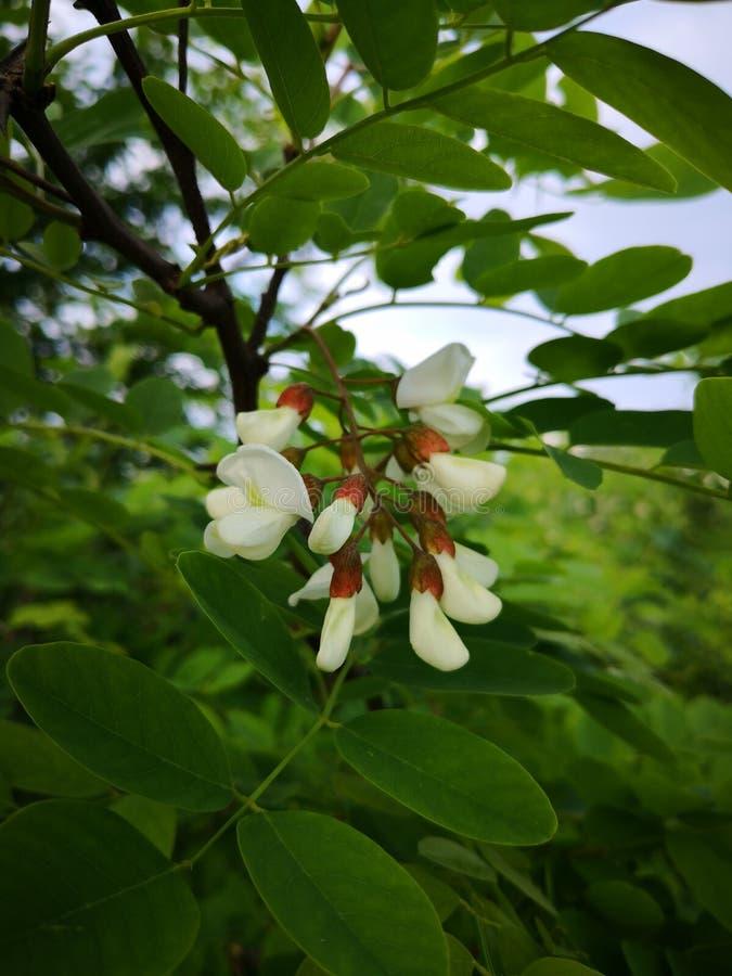 Kwiaty wiosna obraz stock