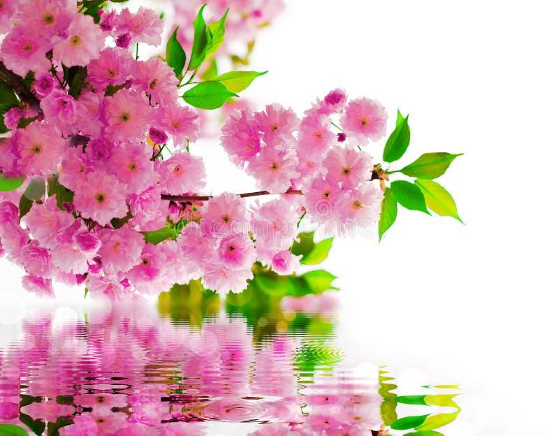 Kwiaty, woda fotografia stock