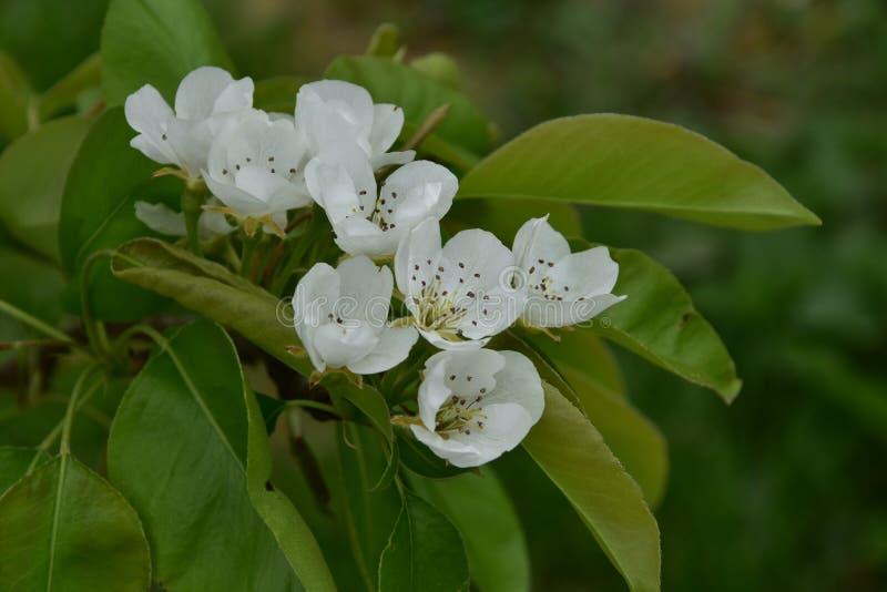 Kwiaty wydają się drzewnymi fotografia stock