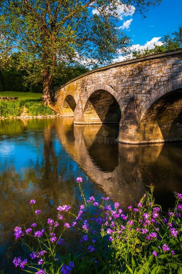 Kwiaty wzdłuż Antietam zatoczki i Burnside mosta przy Antietam obywatela polem bitwy, zdjęcia royalty free