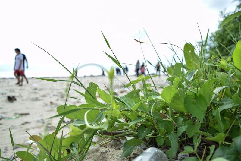 Kwiaty wzdłuż brzeg sebesi wyspa w bandar lampung Indonesia fotografia stock