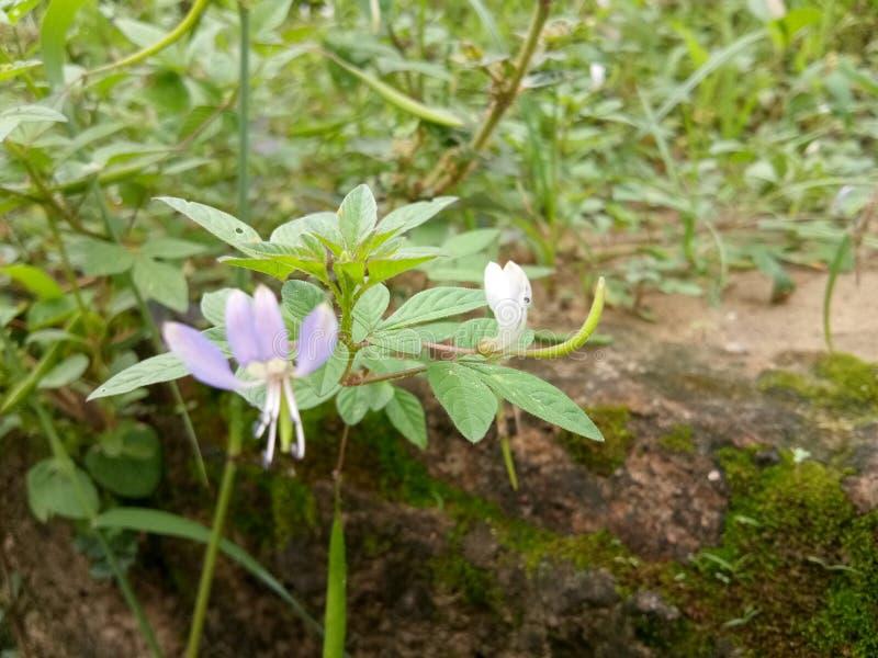 Kwiaty wzdłuż ogrodzenia fotografia stock