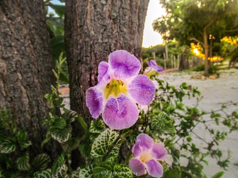 kwiaty z ich naturalnym połyskiem zdjęcie stock