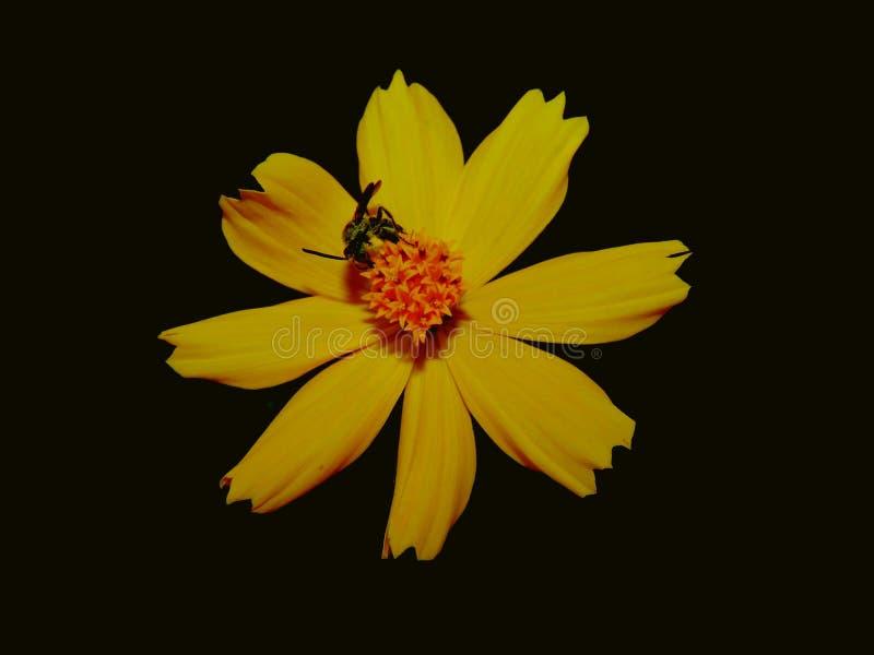 Kwiaty z małymi pszczołami zdjęcia royalty free