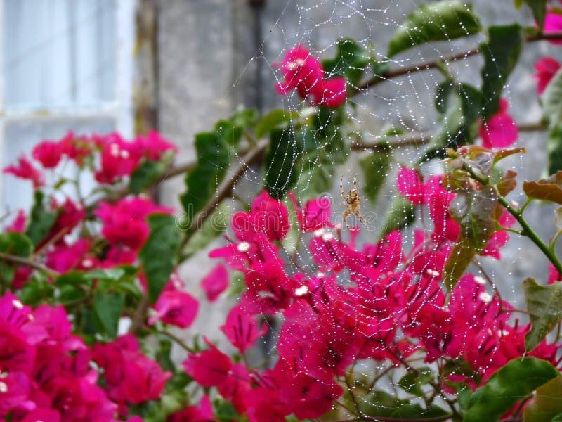 Kwiaty z spiderweb zdjęcie stock