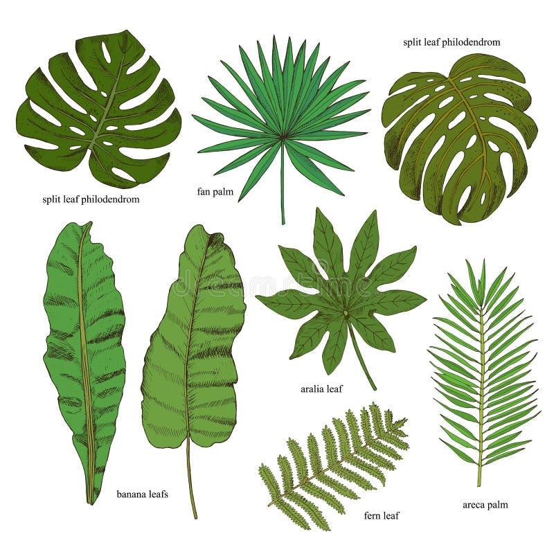 kwieciści dekoracyjni elementy dużo ustawiają Kolekcja z tropikalnymi liśćmi w nakreślenie stylu desiccant royalty ilustracja