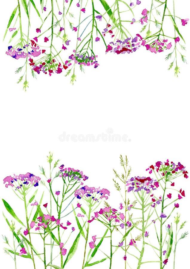 Kwiecista granica łąkowi ziele i kwiaty ilustracja wektor