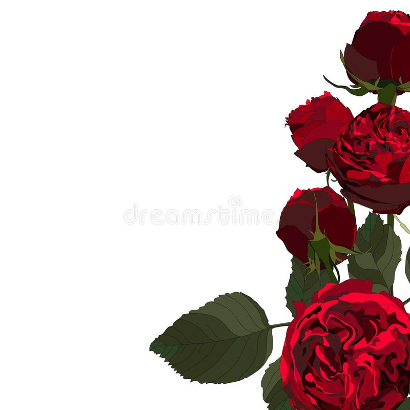 Kwiecista ilustracja, Czerwone róże, liść i pączki, Botaniczny sk?ad dla po?lubia?, kartka z pozdrowieniami royalty ilustracja
