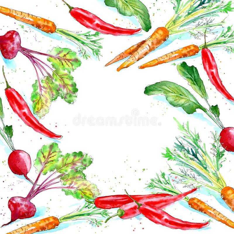 Kwiecista rama marchewka, rzodkwie, buraki i chili pieprz, ilustracji