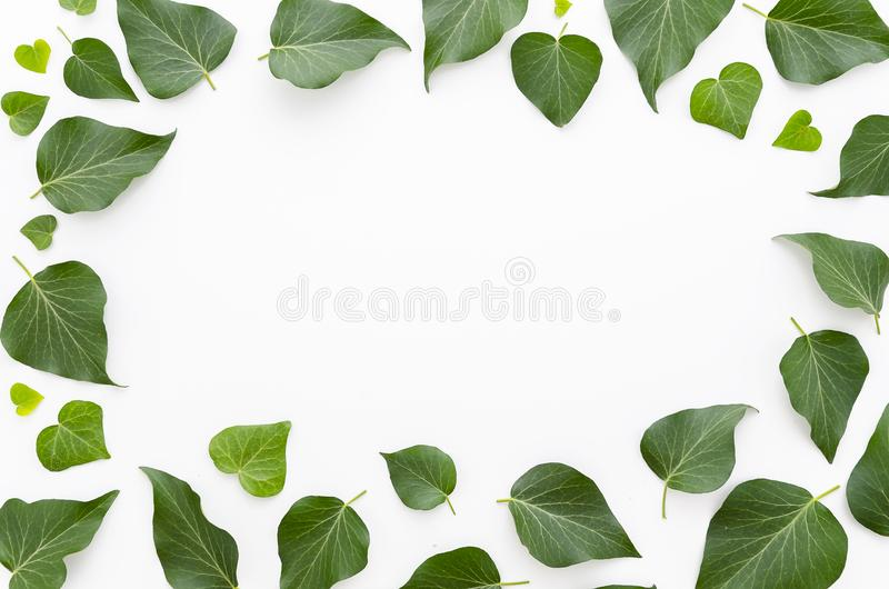 Kwiecista rama robić zieleń opuszcza na białym tle Mieszkanie nieatutowy, odgórny widok Odbitkowa przestrzeń dla ręki literowania obraz stock