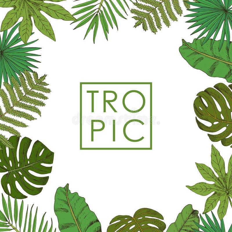 Kwiecista rama z palmowymi liśćmi na białym tle, ręka ilustracja wektor