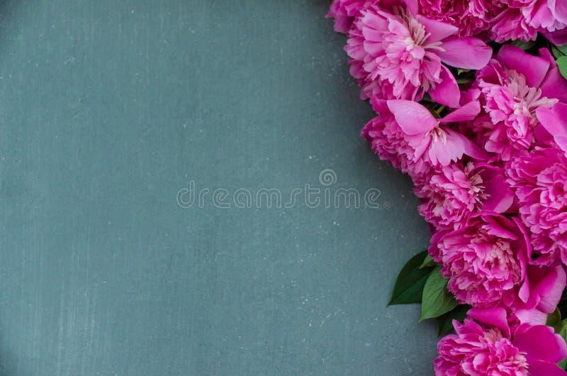 Kwiecista rama z różowymi peoniami kwitnie na popielatym tle Selekcyjna ostrość, miejsce dla teksta, odgórny widok zdjęcia royalty free