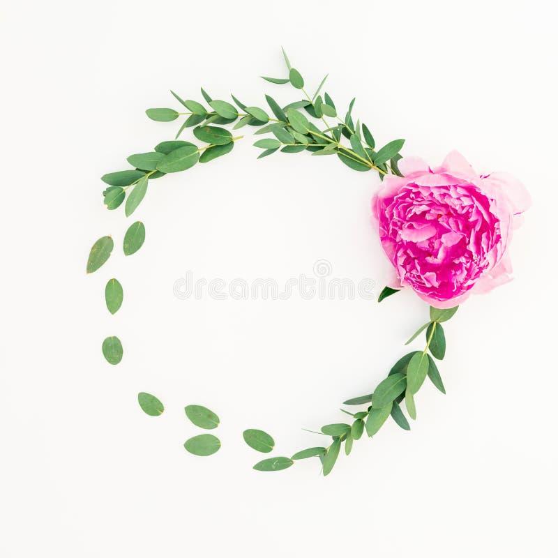 Kwiecista round rama różowy peonia kwiat, hypericum i eukaliptus na białym tle, Mieszkanie nieatutowy zdjęcia stock