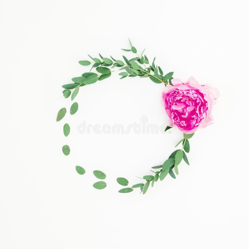 Kwiecista round rama z różowym peonia kwiatem, hypericum i eukaliptusem na białym tle, obrazy stock