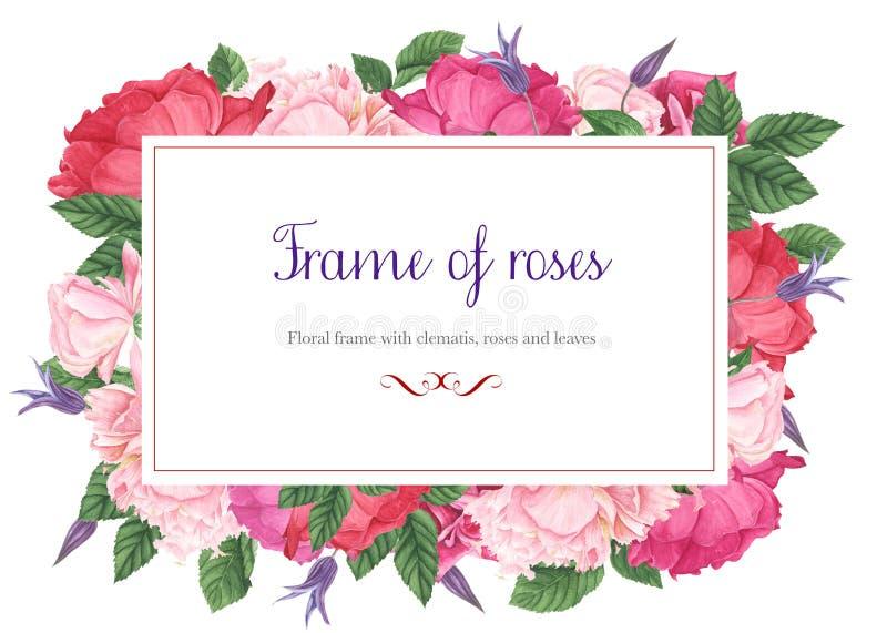Kwieciste ramy z różami, purpurowym clematis i zielonymi liśćmi różowymi i czerwonymi, akwarela obraz zdjęcia stock