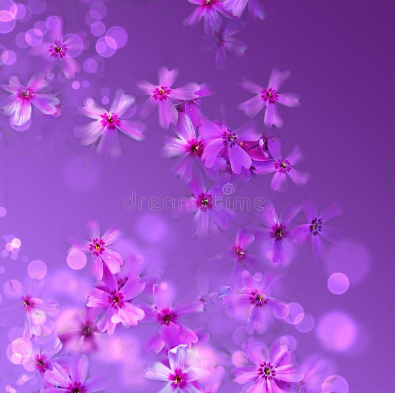 kwieciste tło purpury obrazy royalty free