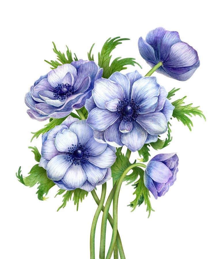 Kwiecistego powitania piękny bukiet kwitnie wiosna anemony obraz royalty free