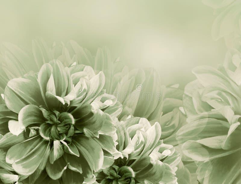 Kwiecistej rocznik zieleni piękny tło Czerwone dalie i p?atk?w kwiaty Zako?czenie royalty ilustracja