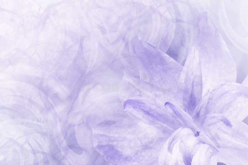 Kwiecisty abstrakcjonistyczny bławy - biały tło Płatki leluja kwitną na białym błękitnym mroźnym tle Zakończenie Kwiatu collag obrazy stock
