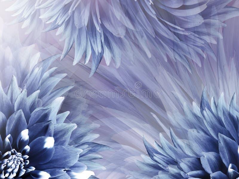 Kwiecisty Błękitny tło Kwitnie dalii zakończenie na świetle błękitny tło - purpura - Kwitnie skład royalty ilustracja